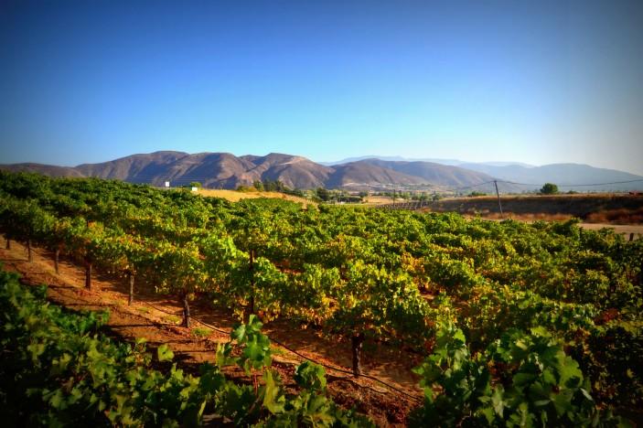 Longshadow Ranch Vineyard Amp Winery Temecula Valley
