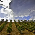 Temecula Valley Wine Country Celebrates California Wine Month