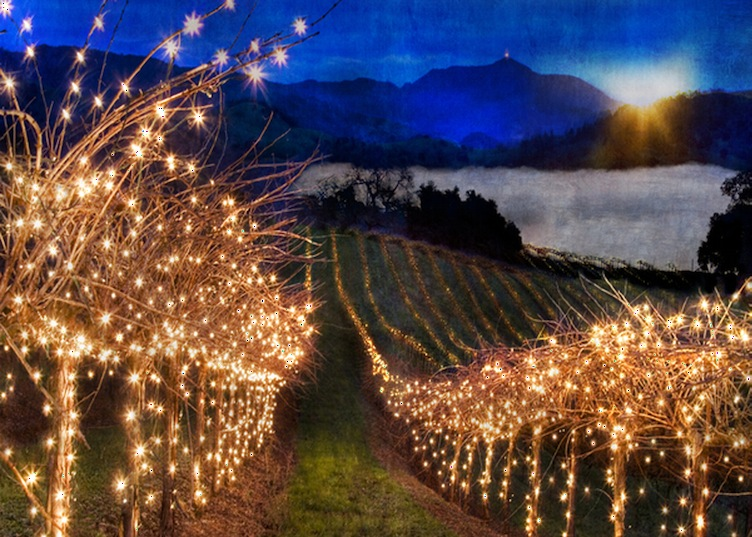 Christmas Lights In Temecula 2020 temecula christmas things to do | Temecula Valley Winegrowers