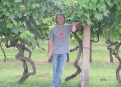 Fano-Vineyards