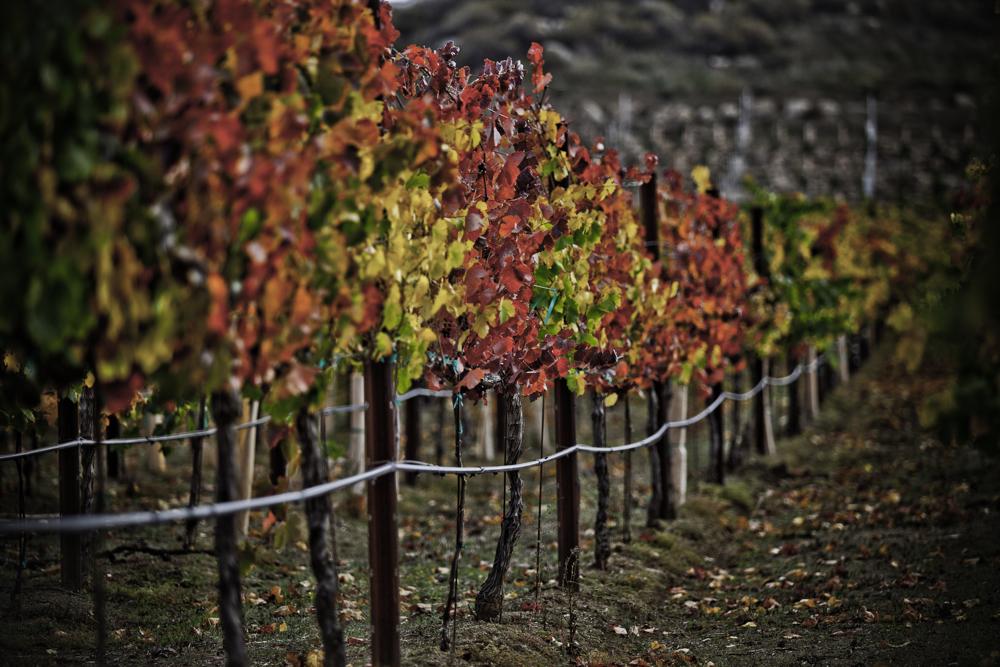 California Wine Valley Tours