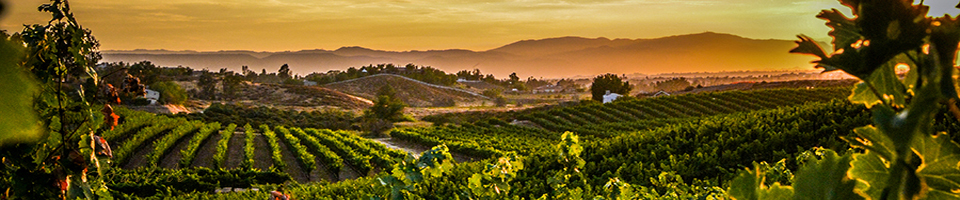 temecula valley winegrowers association maurice car rie vineyard